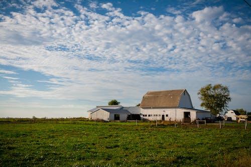 คลังภาพถ่ายฟรี ของ agbiopix, การเกษตร, ตะวันลับฟ้า, นา