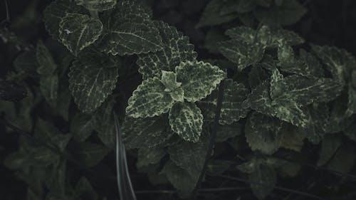 คลังภาพถ่ายฟรี ของ 4k, มืด, สีเขียว, เจ้าอารมณ์