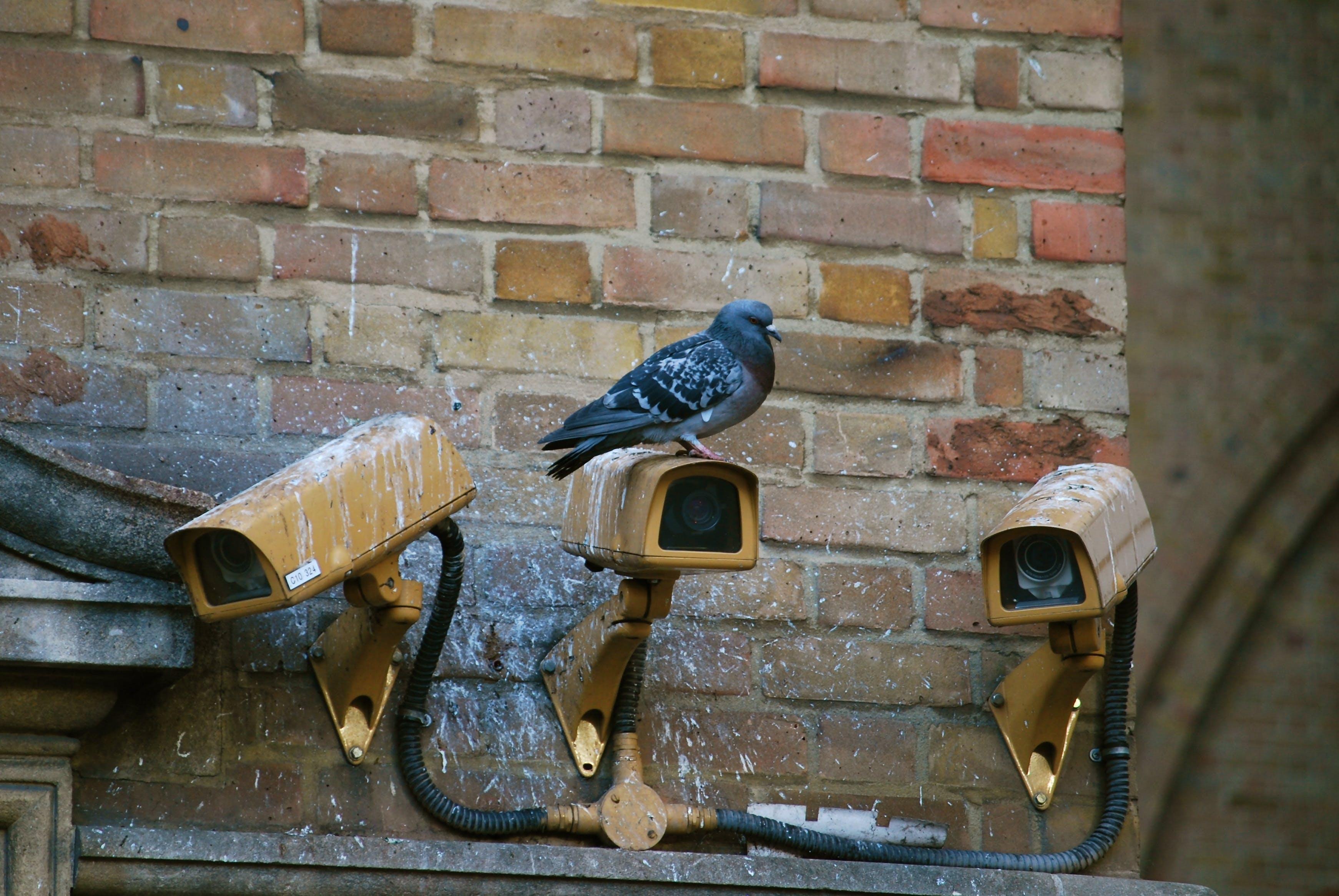 Free stock photo of camera, watch, watching, urban