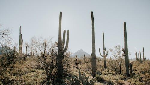 Photos gratuites de arbre, aride, arizona, aube
