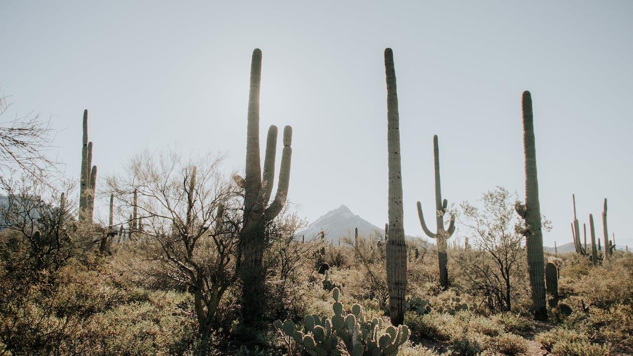 Flora kaktus kerap kita temukan di gurun