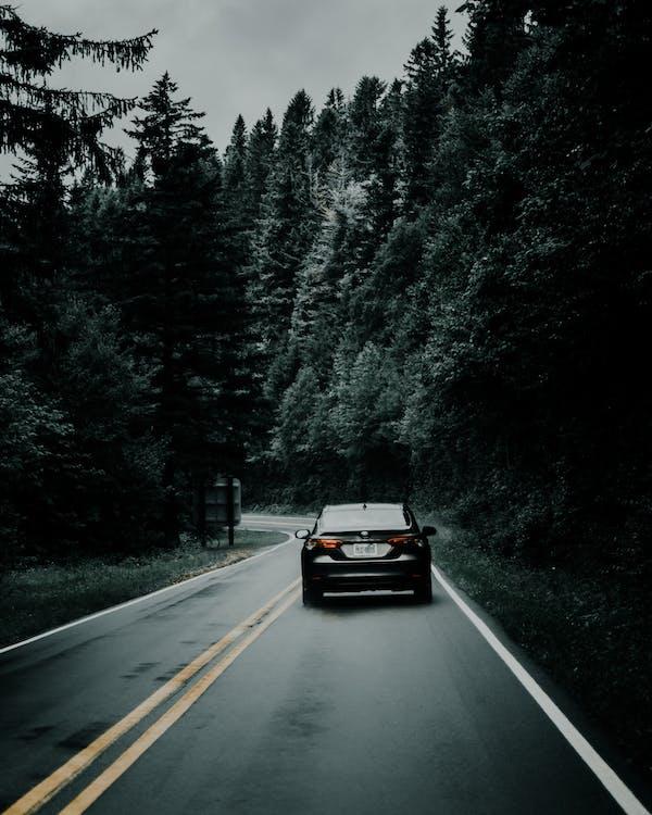 교통체계, 나무, 도로