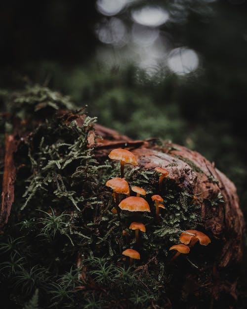 廠, 森林, 橙子, 綠色 的 免費圖庫相片