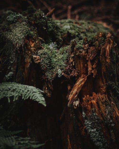 原本, 森林, 樹, 樹墩 的 免費圖庫相片