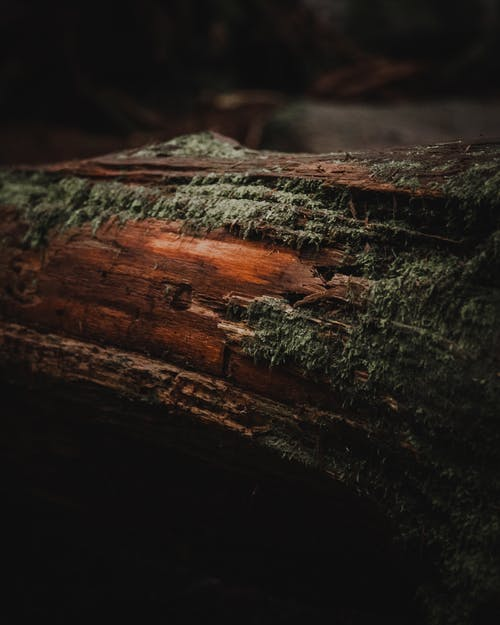 Δωρεάν στοκ φωτογραφιών με βρύο, δασικός, δέντρα, δέντρο