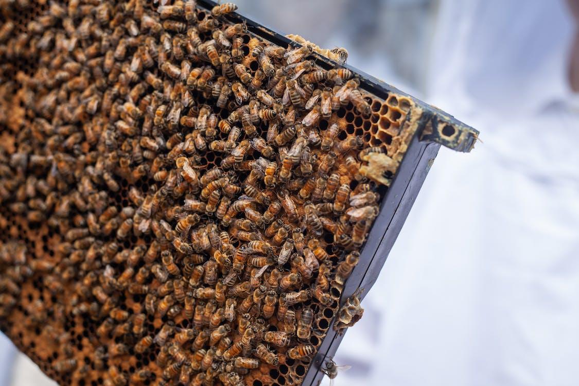 art, Bee The Change, beekeeping