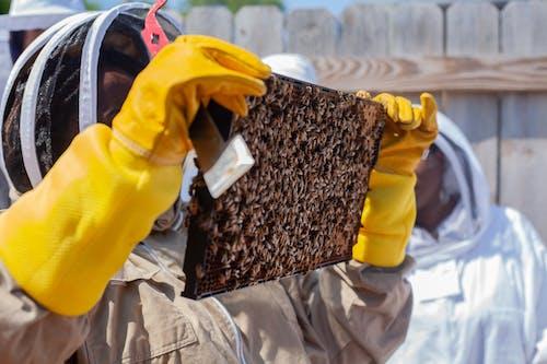 Бесплатное стоковое фото с detroithives, городское пчеловодство, городской, детройт