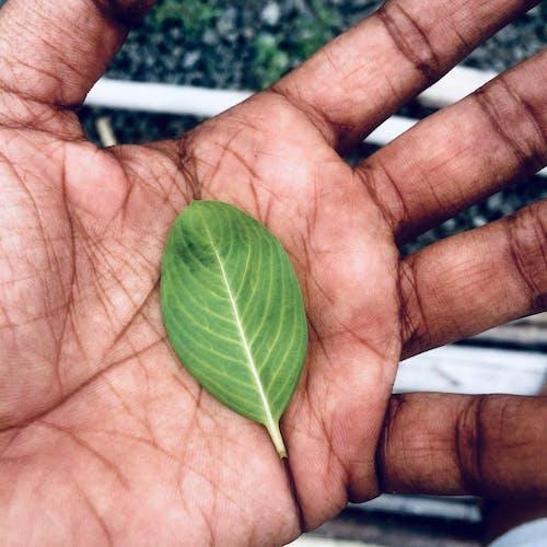 Ingyenes stockfotó eső után, esőcseppek, őszi levelek, zöld levél témában