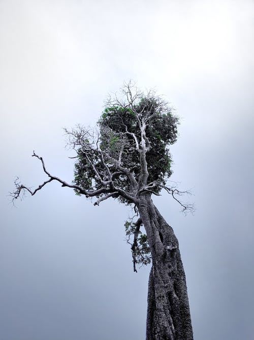 Fotobanka sbezplatnými fotkami na tému 4k tapety, bambusové stromy, banánovník, čierna tapeta