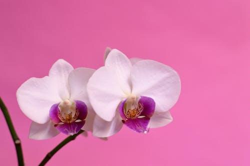 Ingyenes stockfotó botanika, botanikus, dekoráció, dekoratív témában