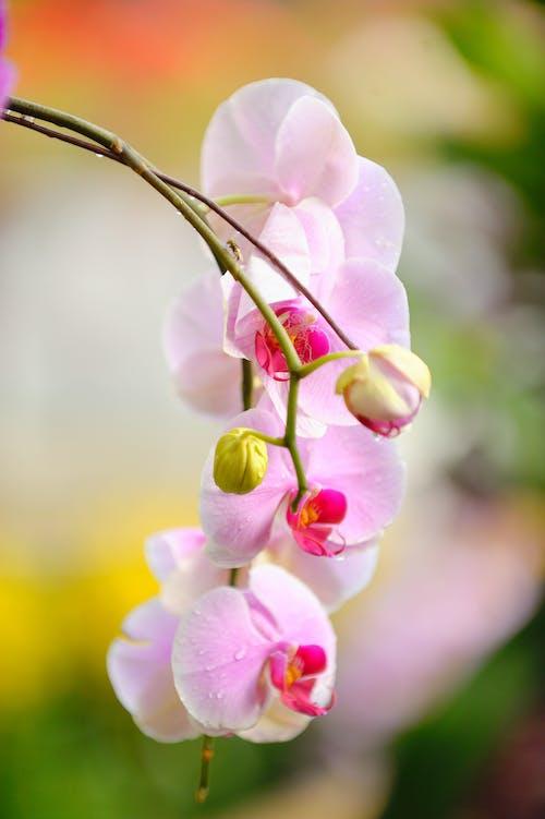 bitki örtüsü, bulanık arka plan, büyüme, çiçek içeren Ücretsiz stok fotoğraf