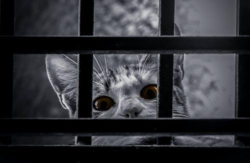 Immagine gratuita di acchiappasogni, animale carino, animale domestico, bar