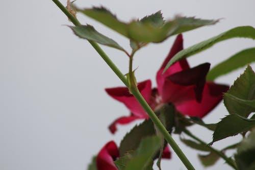 Ảnh lưu trữ miễn phí về hoa đẹp