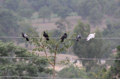 Free stock photo of birds