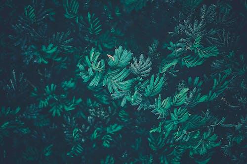 Gratis stockfoto met donkergroen, groene bladeren, vervaagd groen