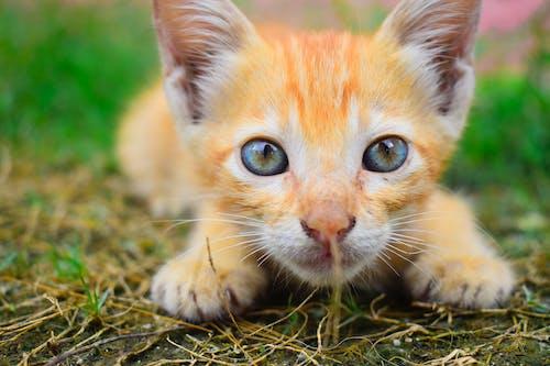 Ilmainen kuvapankkikuva tunnisteilla eläin, kissa, kissanpentu, kisu