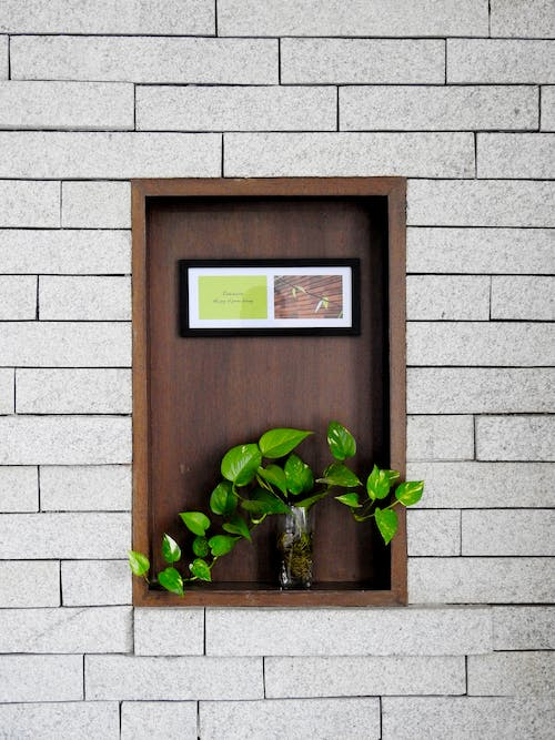 Free stock photo of black frame, box, creeper plant, decoration