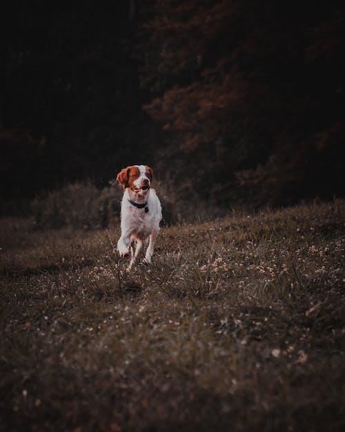 動物, 動物攝影, 可愛, 可愛的 的 免費圖庫相片