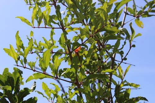 Free stock photo of leaf, tree