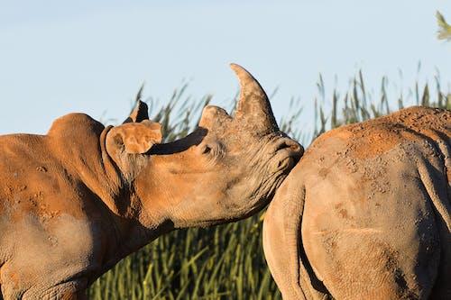 공원, 동물, 동물 사진, 멸종 위기 동물의 무료 스톡 사진