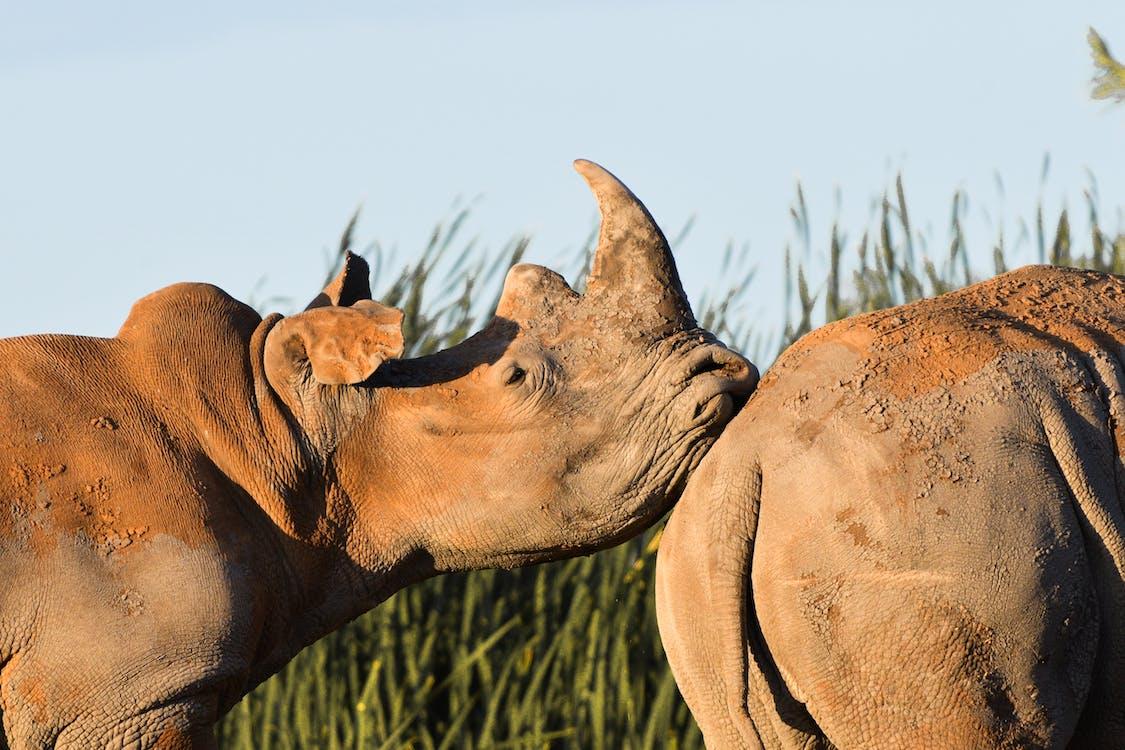 al aire libre, animal, en peligro de extinción