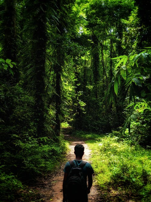 Δωρεάν στοκ φωτογραφιών με 4k ταπετσαρία, trekking, δασικός, κάλυψη δασών