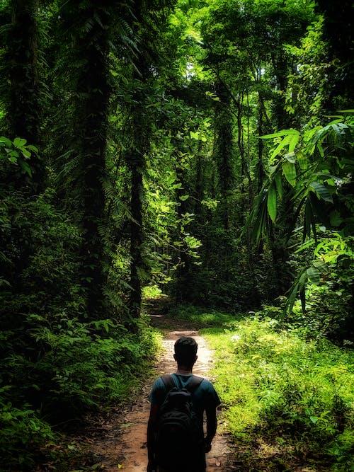 Fotobanka sbezplatnými fotkami na tému 4k tapety, lastovička, les, lesa