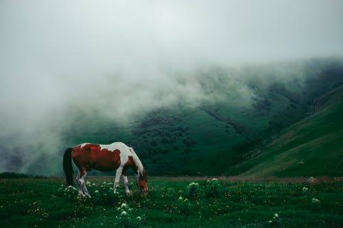 Free stock photo of fog, glade, horse, meadow