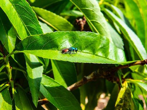 多色的, 天性, 小蟲, 彩色的蟲子 的 免費圖庫相片