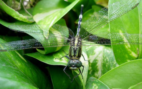Free stock photo of beauty in nature, close up, dragonfly, dragonfly eye