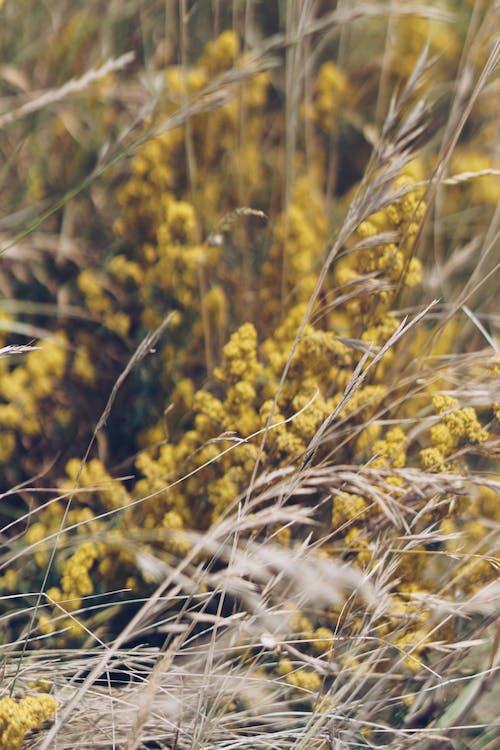 꽃, 노란 꽃, 대자연, 자연의 무료 스톡 사진