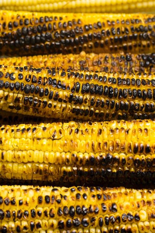 Бесплатное стоковое фото с еда, жареный на гриле, кукуруза, початок
