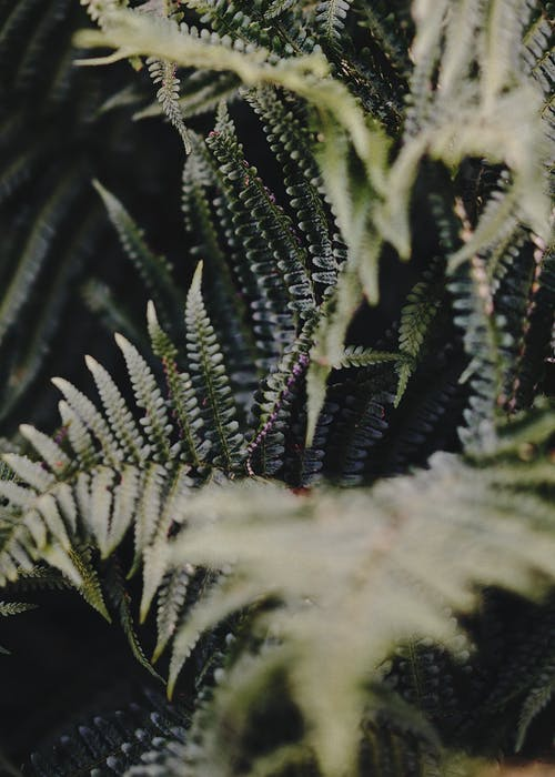 Kostnadsfri bild av fernblad, grön, ormbunke