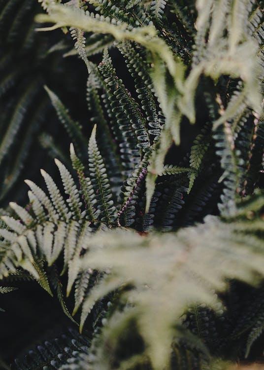 fabriek, groen, palmblad