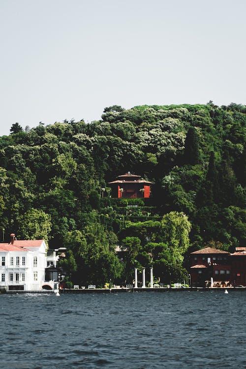 Безкоштовне стокове фото на тему «вода, дім, ліс»