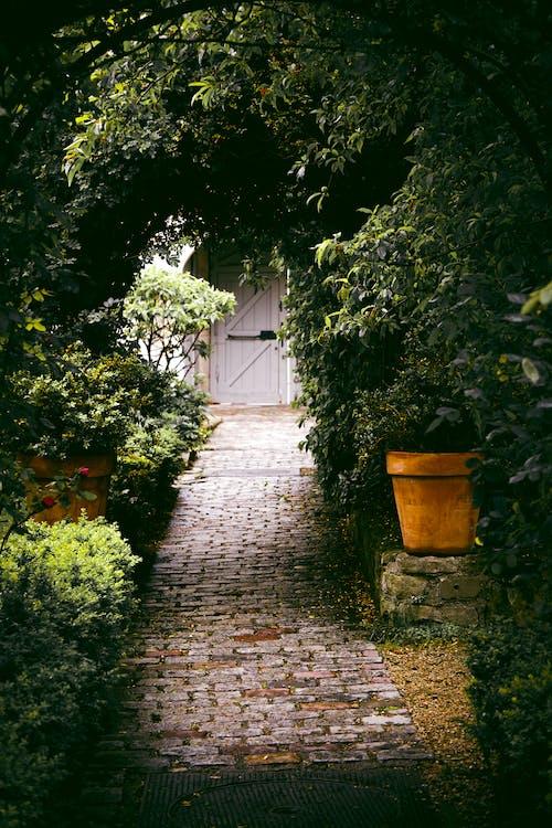 Безкоштовне стокове фото на тему «брущатий камінь, вказівки, домашні рослини, заводи»