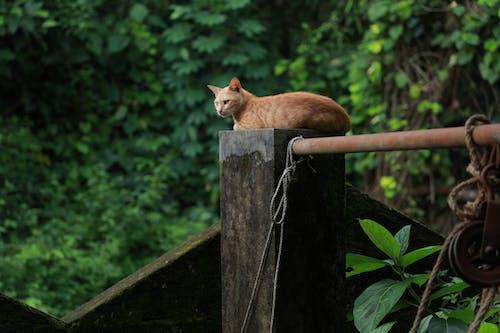 Ảnh lưu trữ miễn phí về con mèo, con vật, đáng yêu, dễ thương