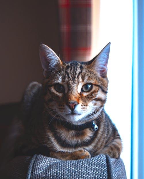 Foto stok gratis anak kucing, dalam ruangan, detail, kucing