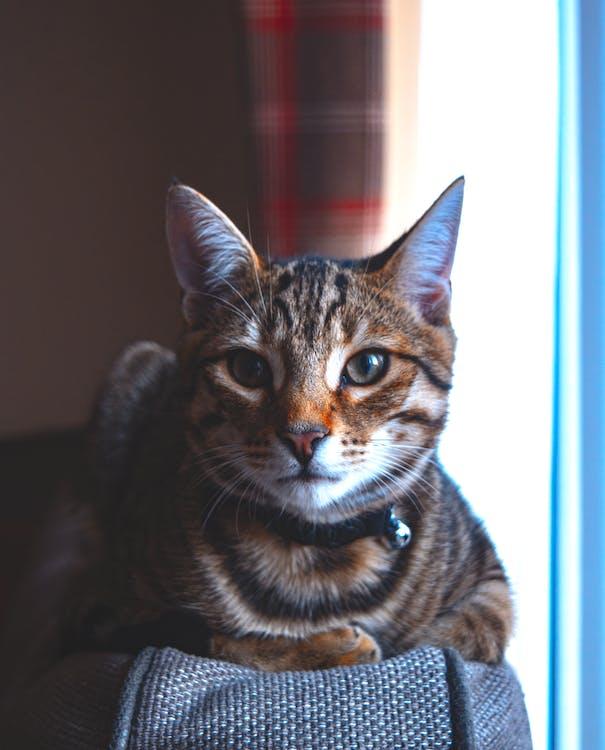 dentro de casa, detalhes, felino