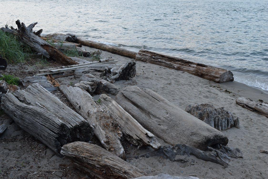 beach, driftwood