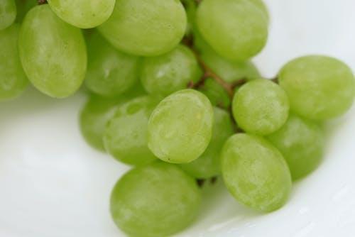 Бесплатное стоковое фото с виноградная ветвь