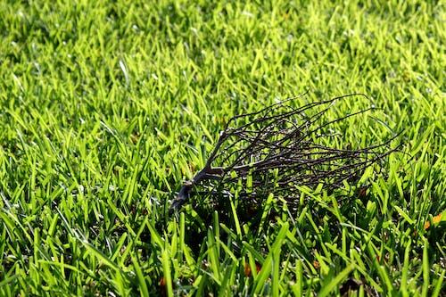 녹색, 잔가지, 잔디의 무료 스톡 사진