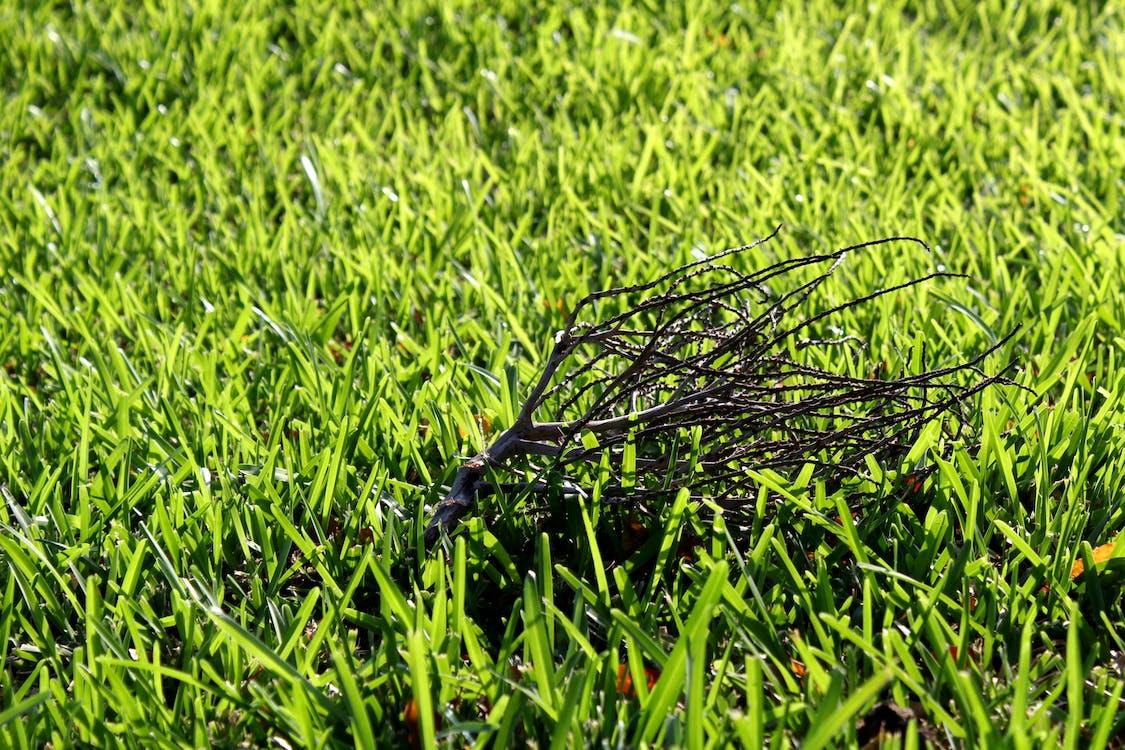 gräs, grön, kvist