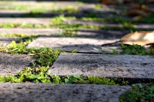 돌 바닥, 숲길, 인도, 풀이 무성한의 무료 스톡 사진