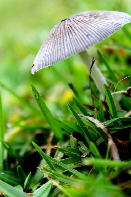 버섯, 산림 버섯, 싱글, 혼자의 무료 스톡 사진