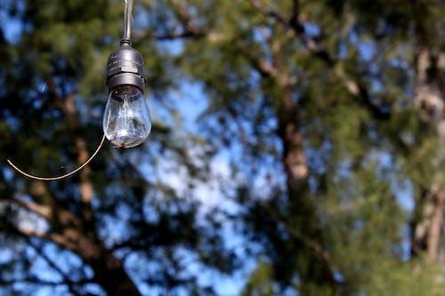 계절, 계절성, 뒤뜰, 벌거 벗은 나무의 무료 스톡 사진
