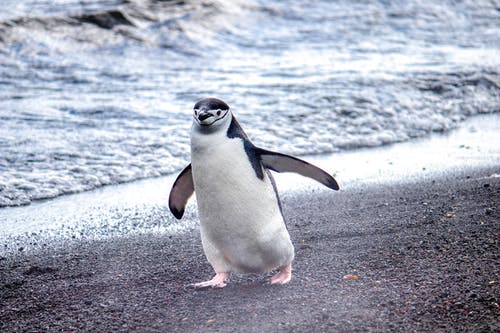 Photo of Penguin Walking on Seashore