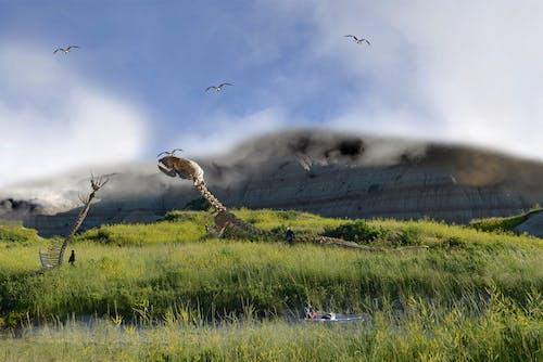 arkeoloji, film, fosil yatağı, fosiller içeren Ücretsiz stok fotoğraf