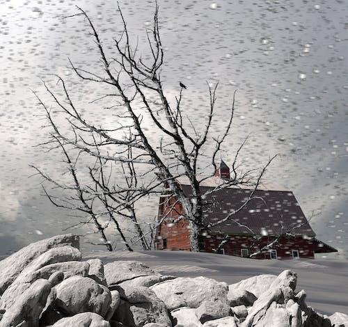 คลังภาพถ่ายฟรี ของ นา, ฤดูหนาว, หิมะ