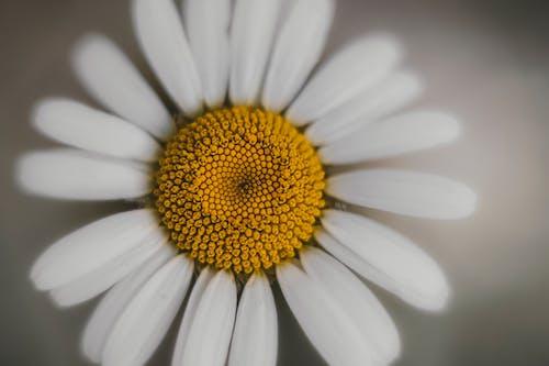 White flower on gray background